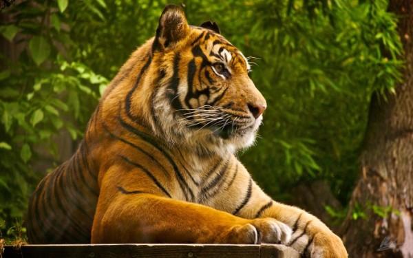 Гороскоп здоровья Тигров на 2016 год