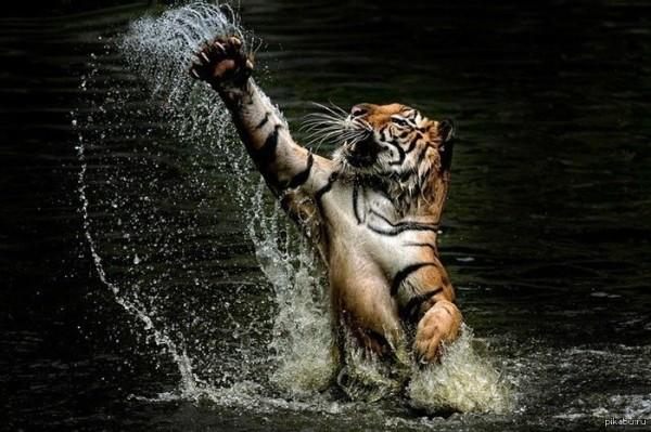 Гороскоп карьеры Тигров на 2016 год
