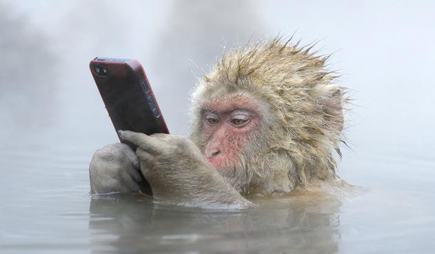 Поздравления смс с новым годом 2016 обезьяны прикольные