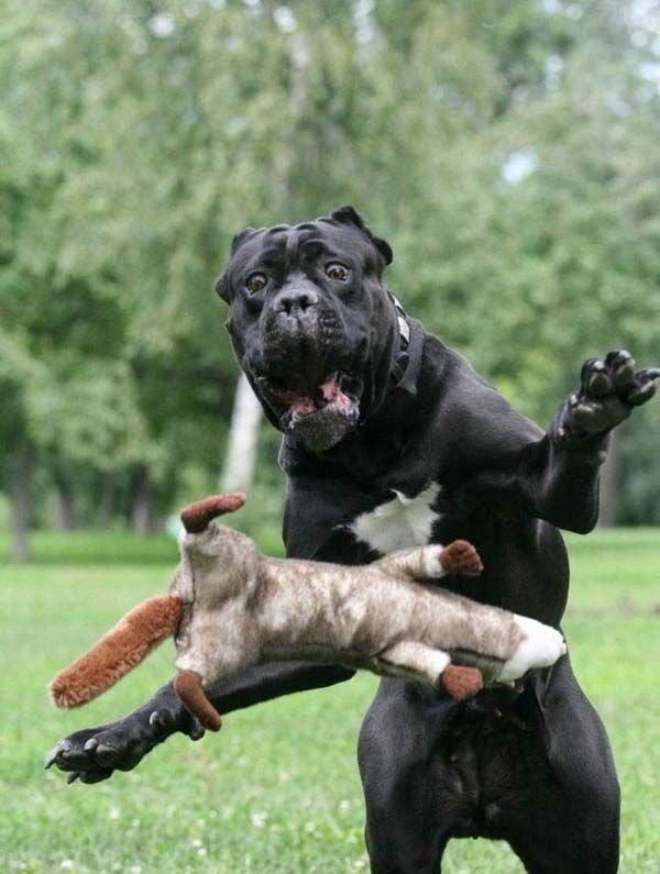 Денежный гороскоп - финансы Собаки в 2016 году
