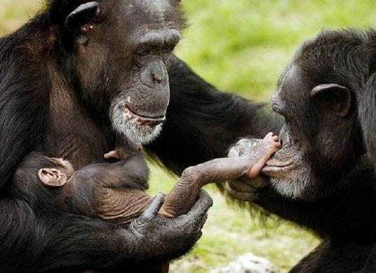 Поздравления с новым годом обезьяны для коллег по работе