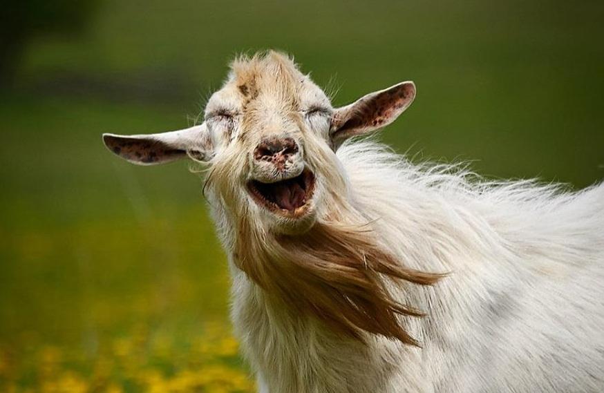 гороскоп для год рождения козы восточный