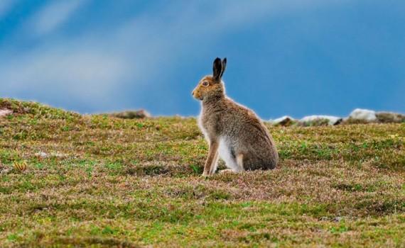 Кролик - гороскоп 2016