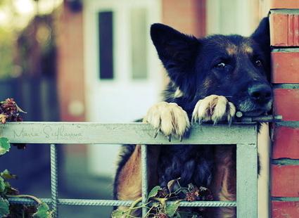 Собака ждет