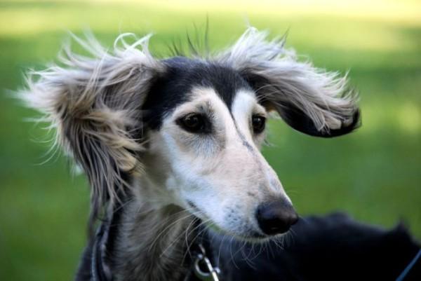 Гороскоп женщины Собаки на 2016 год