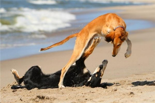 Собака - любовный гороскоп на 2016 год