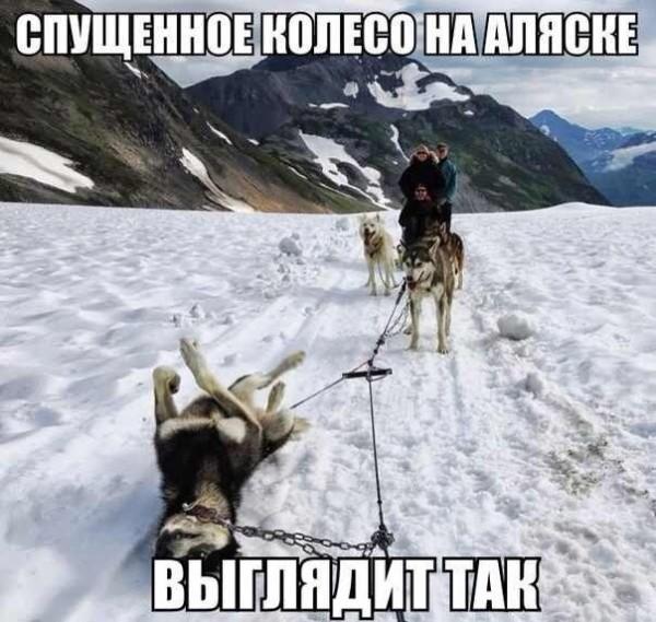 Гороскоп здоровья Собаки