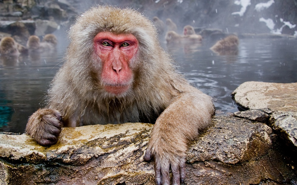 Новогодние раскраски 2016 обезьяны