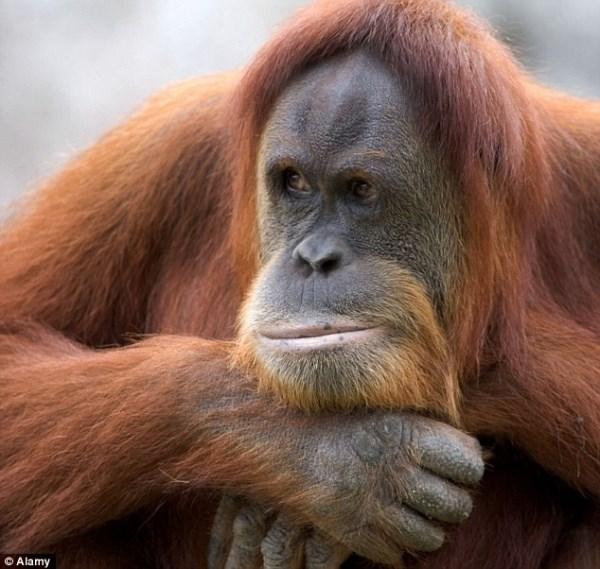 Новогодние украшения своими руками 2016 год обезьяны