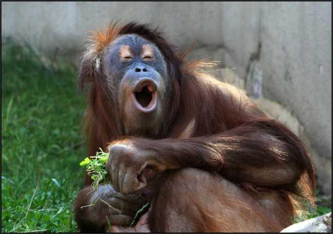 Раскраски обезьянок с