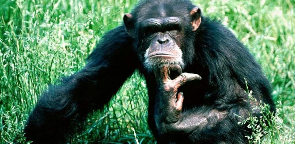 Картинки обезьяны на открытки 58