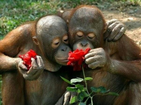 Картинки по запросу смешные картинки про обезьян