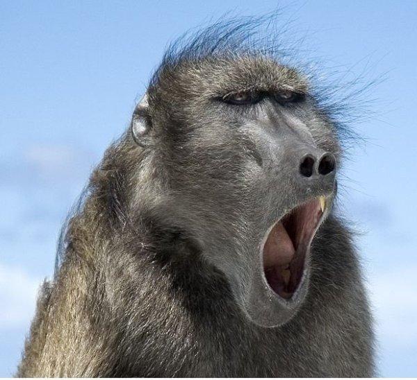 Картинки красивые обезьянки
