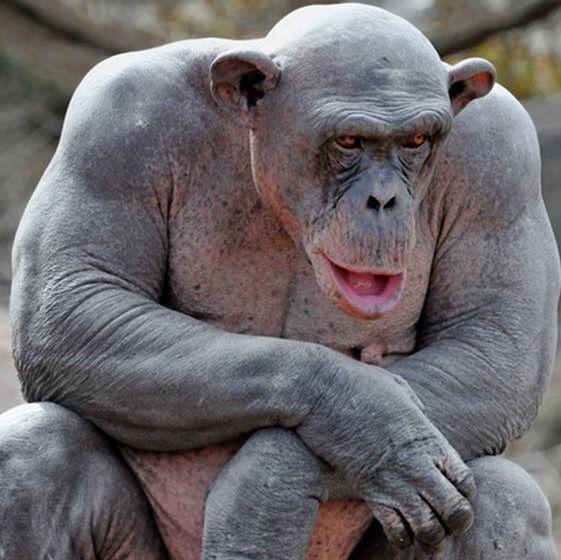 Фото обезьян для раскраски