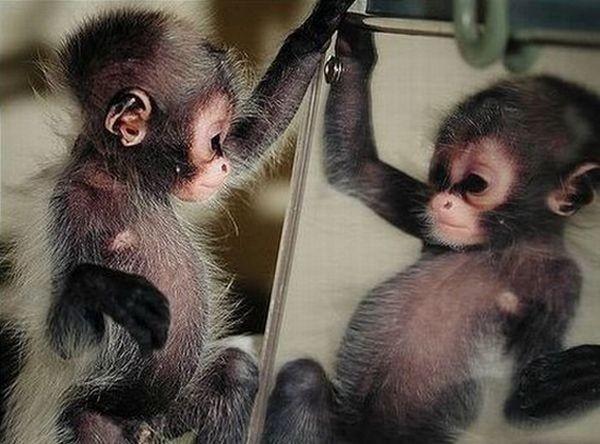 Новогодние открытки с обезьянками своими руками