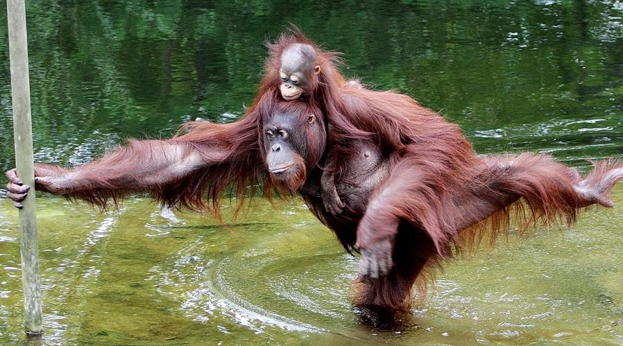 2016 год картинки год обезьяны