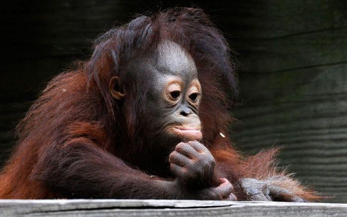 Раскраски картинки обезьянок