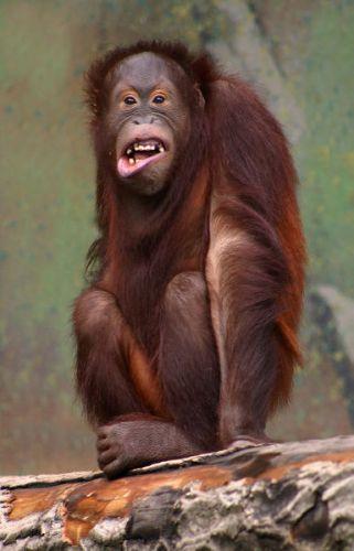 Картинки раскраски год обезьяны