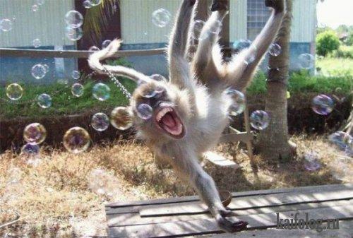 Открытка своими руками с обезьянами