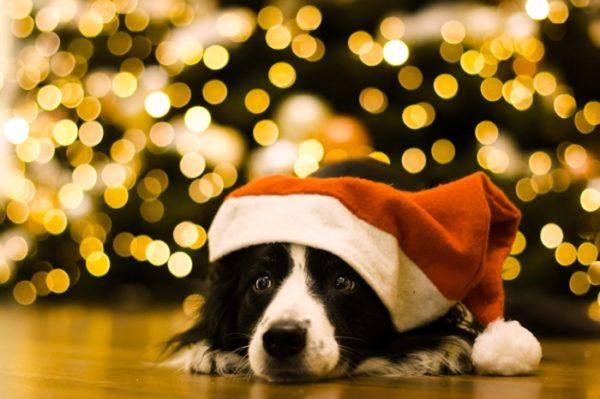 Собака - Новый Год 2018