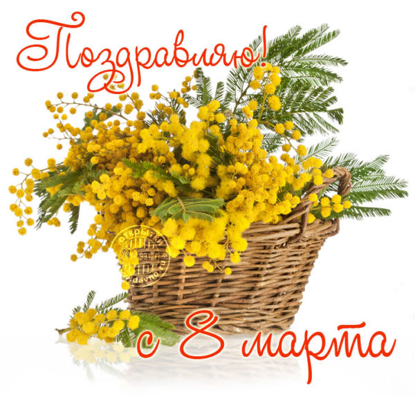 8-marta-mimoza-1-600x600.jpg