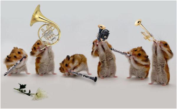 Смешные поздравления для музыкантов