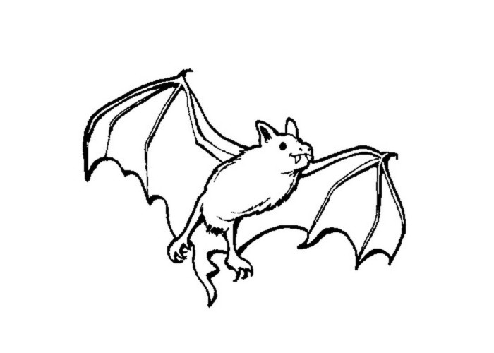 Раскраска - летучая мышь на Хэллоуин