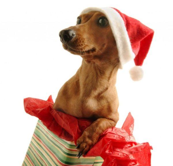Прикольные новогодние фото Собак и собачек