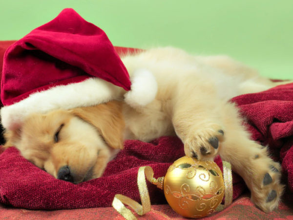 новогодние фото-картинки милых и прикольных маленьких щенков