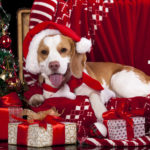 Новогодние картинки на рабочий стол 2018 с Собаками