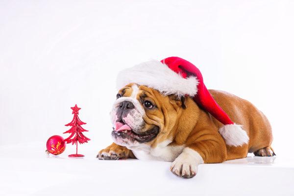 Новогодние обои для рабочего стола на год Собаки