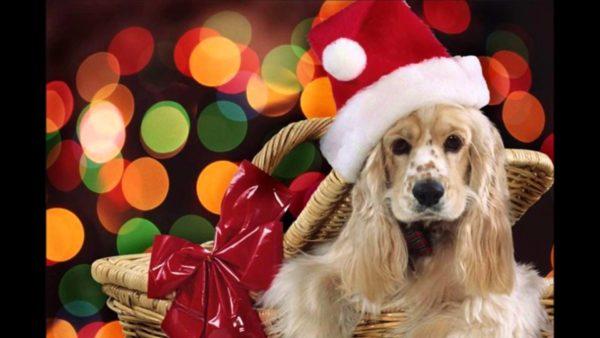 Картинки на рабочий стол с Собаками и щенками
