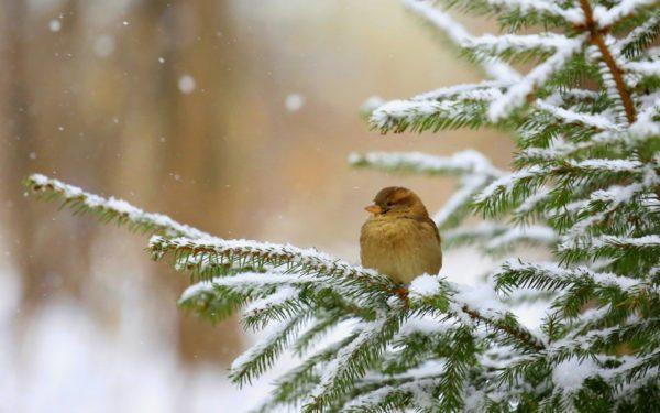 Лучшие новогодние фотографии и картинки зимней природы