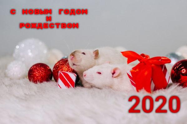 Открытки с Новым годом и Рождеством 2020