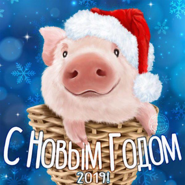 Новые поздравительные открытки со свиньями и кабанами на Новый 2019 год