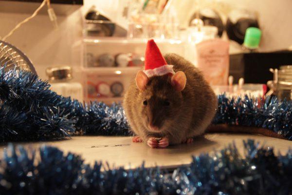 Новогодние обои для рабочего стола год Крысы, Мыши