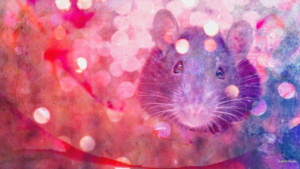 Красивые заставки на рабочий стол с крысами или мышами