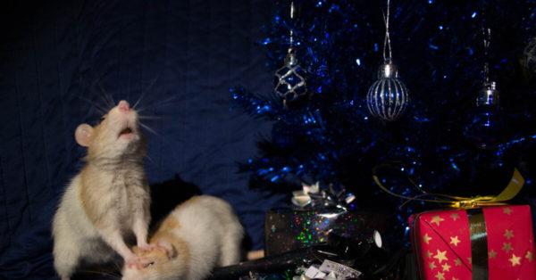 Интересные обои на рабочий стол в год Крысы, Мыши