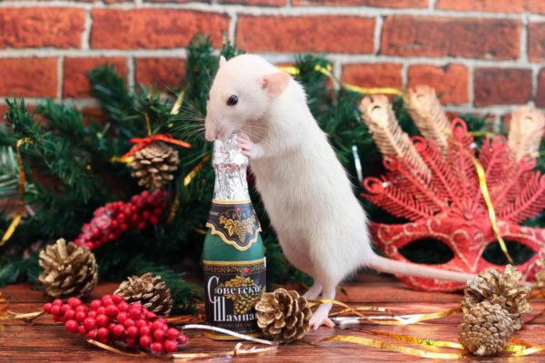 Новогодние обои на рабочий стол с крысами и мышами