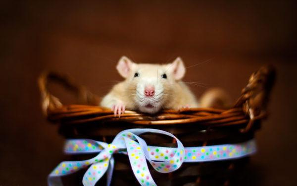 Бесплатные фото-обои на рабочий стол с мышами на Новый год