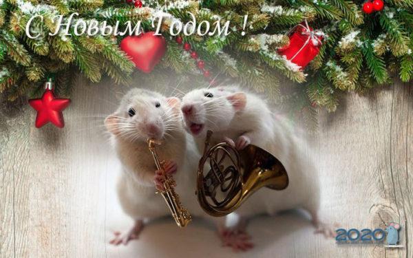 Интересные открытки в год Крысы, Мыши