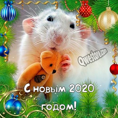 Прикольные открытки с крысами или мышами