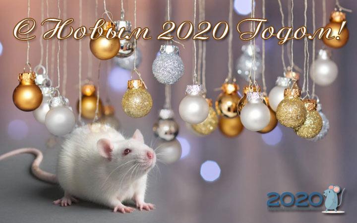 Красивые открытки с мышами, крысами