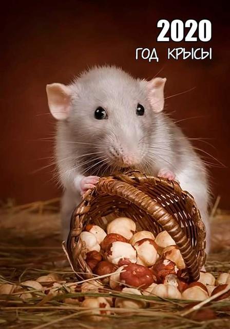 Новогодние открытки с крысами и мышами