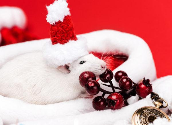 Бесплатные фото-картинки с мышами на Новый год