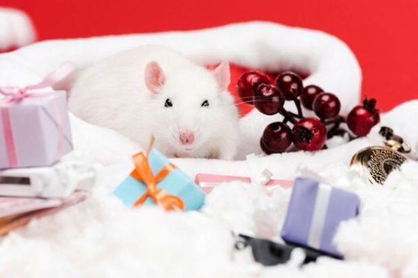 Красивые изображения с новогодними крысами и мышами