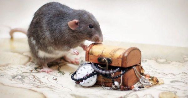 Красивые картинки с мышами