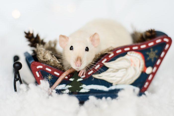 Современные новогодние фото с мышками