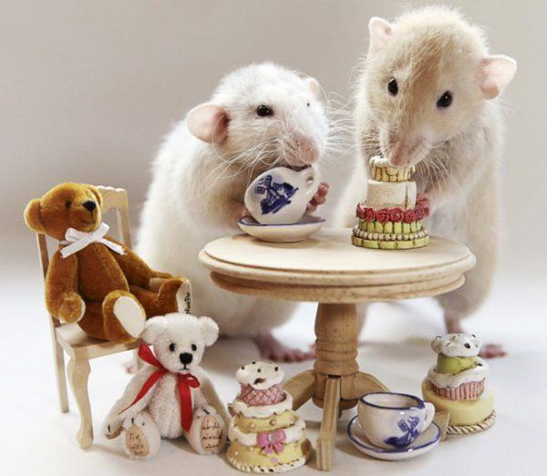 Оригинальные фото-изображения с новогодними мышками и крысами