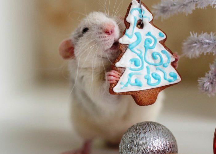 Новогодние картинки с крысами и мышами - красивые открытки, аватары и изображение-поздравление на Новый год Крысы